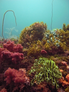 coral reef, Brunei