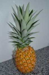 Freshly picked pineapple
