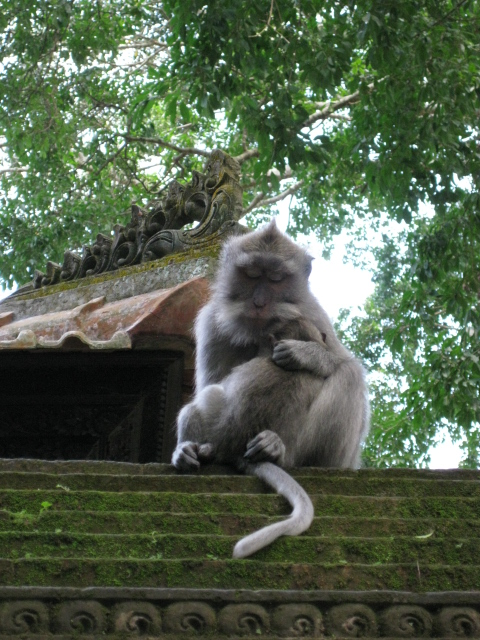 macaques a-top a temple