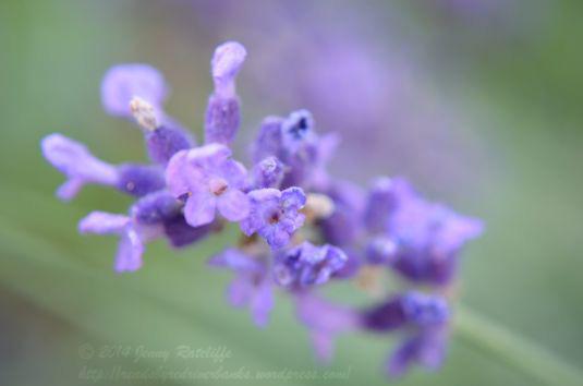purple perfume-power perfection!